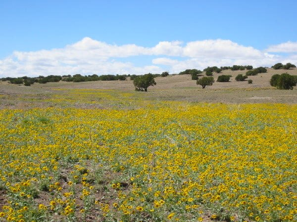 ARIZONA LAND - SHOW LOW / HOLBROOK 10 AC