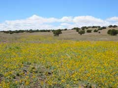 17: ARIZONA LAND, SHOW LOW / CONCHO AREA, 40 AC