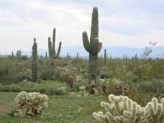 50: ARIZONA LAND, GREATER PHOENIX AREA, MARICOPA CO.