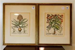 PAIR OF FRAMED FRENCH HORTICULTURAL PRINTS