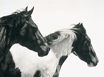 """9: """"Ranch Hands"""" by Karmel Timmons"""