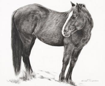 10: Timmons, Karmel, b. 1966, Mustang Winter