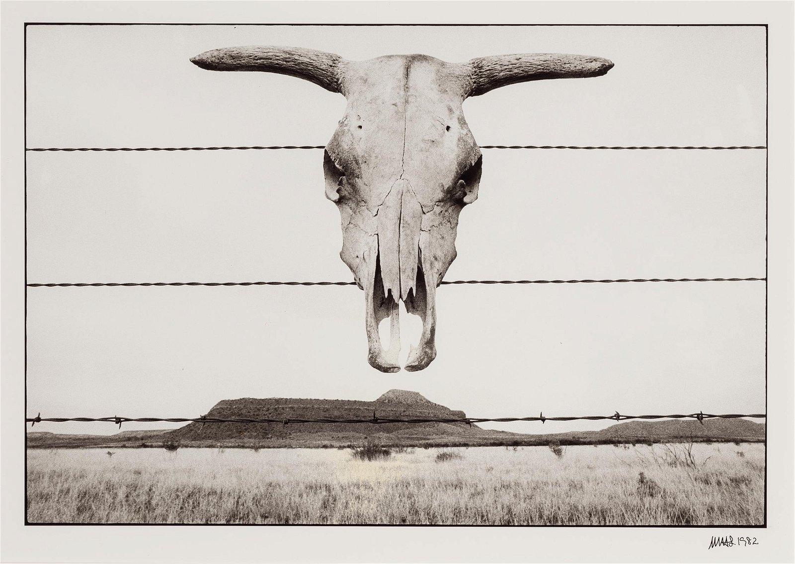 Martin  Schreiber | Skull