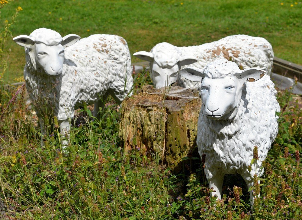 Three fibre glass sheep, one of which is damaged,