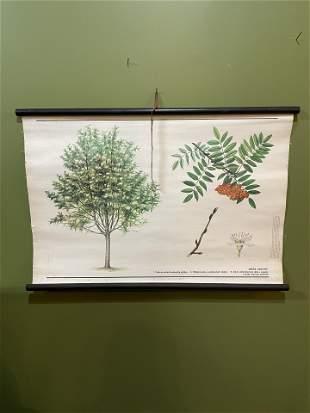 European Botanical School Chart