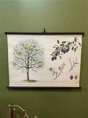 European Botanical School Chart #2