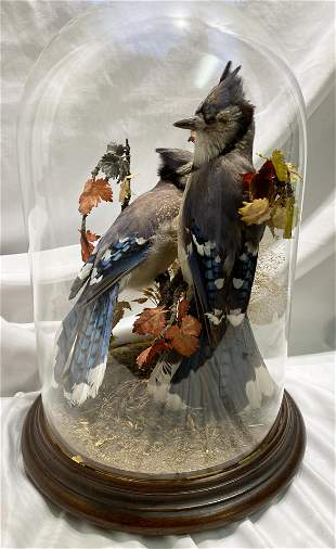 Victorian Bluejay Birds in Dome