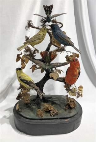 Victorian Birds Collection