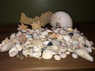 Large Lot Seashells Starfish, Nautilus etc.