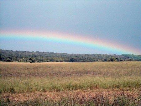 "5: 20 Acres - Hudspeth County, Texas"""