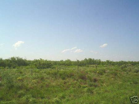 319: PERFECT FOR HOMESITE/RANCH 10 AC TEXAS