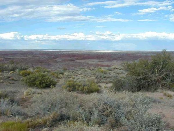 1156: MASSIVE 40 AC APACHE AZ~FANTASTIC LOC.~STRAIGHT
