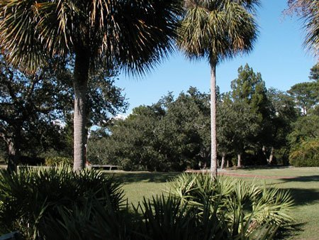 1694: LEVY COUNTY FLORIDA LOT~BEAUTIFUL AREA~STR