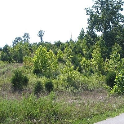 2510: STR SALE! 35 AC Charlotte, AR-Fronts Paved Rd. Wa