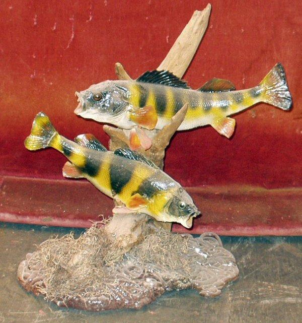 19: TAXIDERMY FISH
