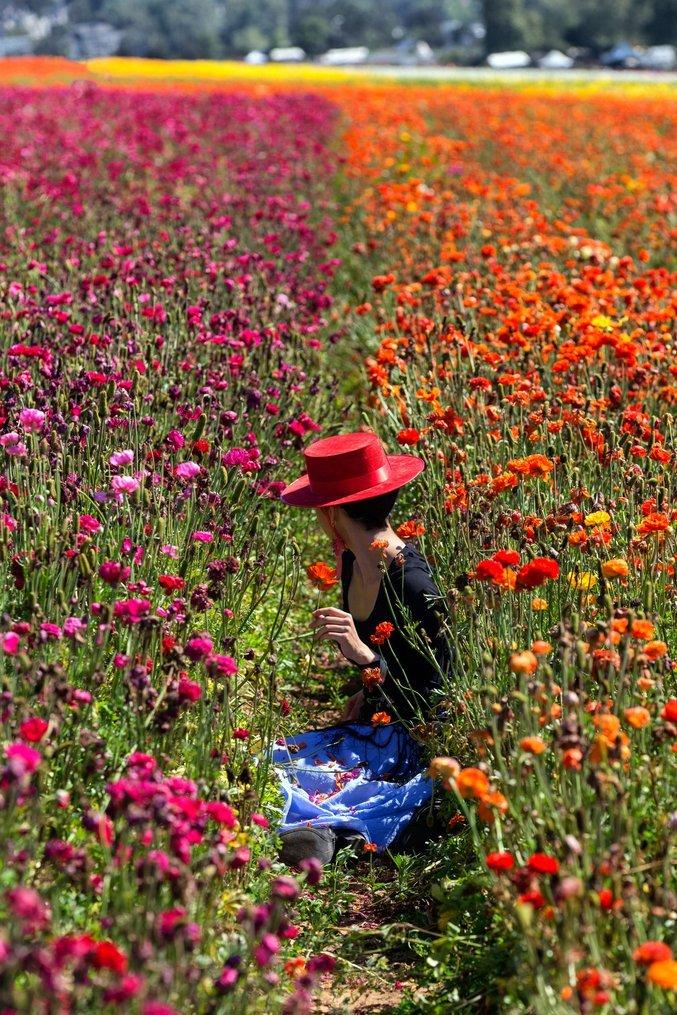 """The Tulip Girl"" by  Harun Mehmedinovic"