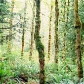 Moss (2011)