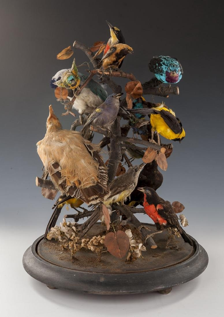 Victorian Taxidermy Bird Grouping in Dome Display