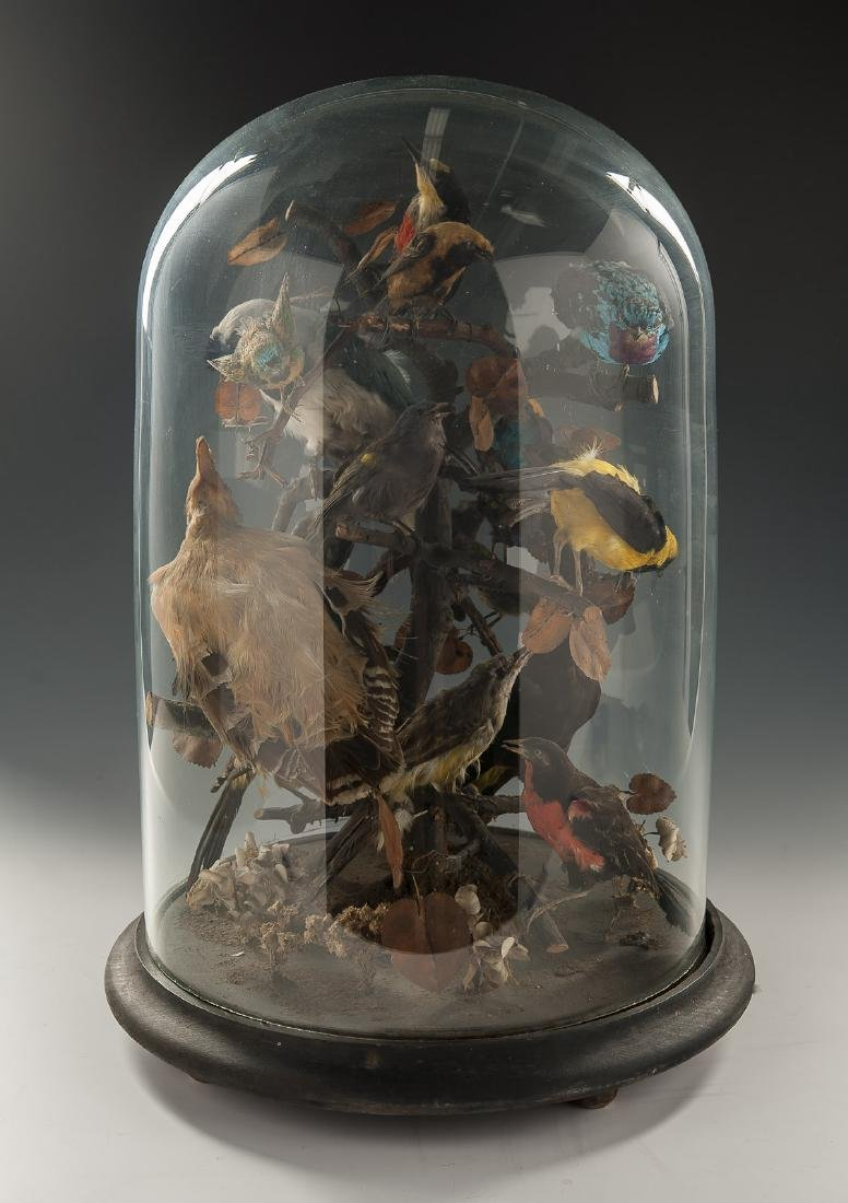 Victorian Taxidermy Bird Grouping in Dome Display - 3
