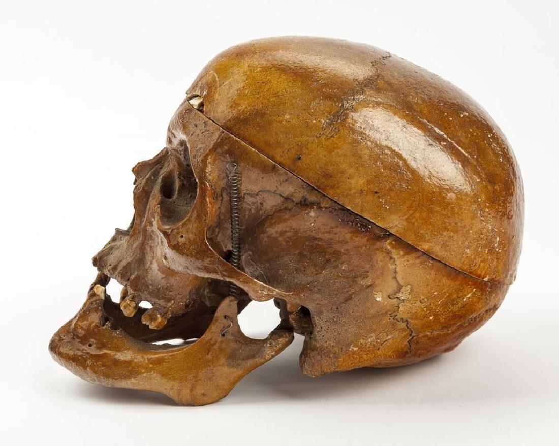Vintage Human Skull for Medical Study - 2