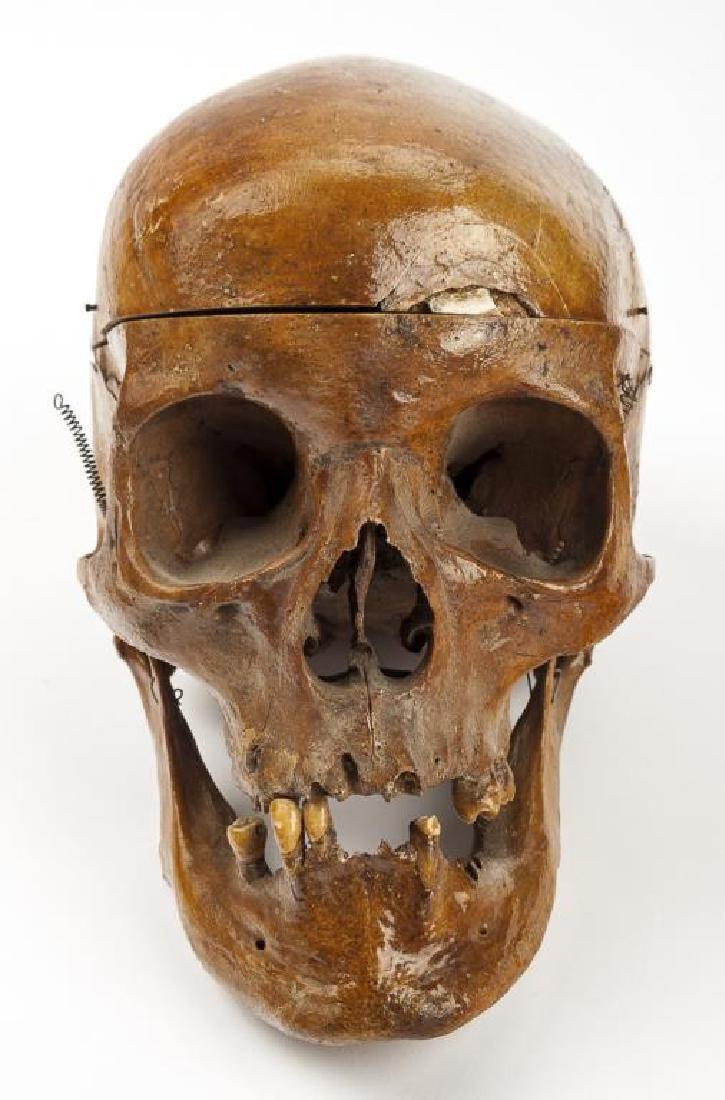 Vintage Human Skull for Medical Study - 3