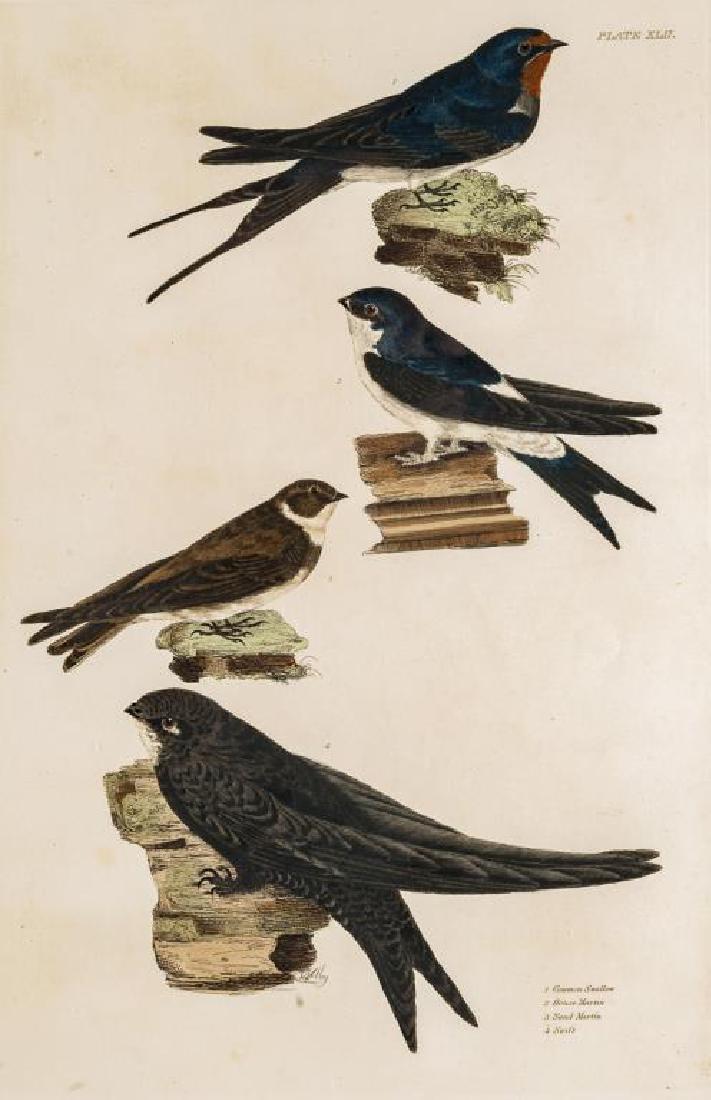 Prideaux John Selby (British, 1788-1867)