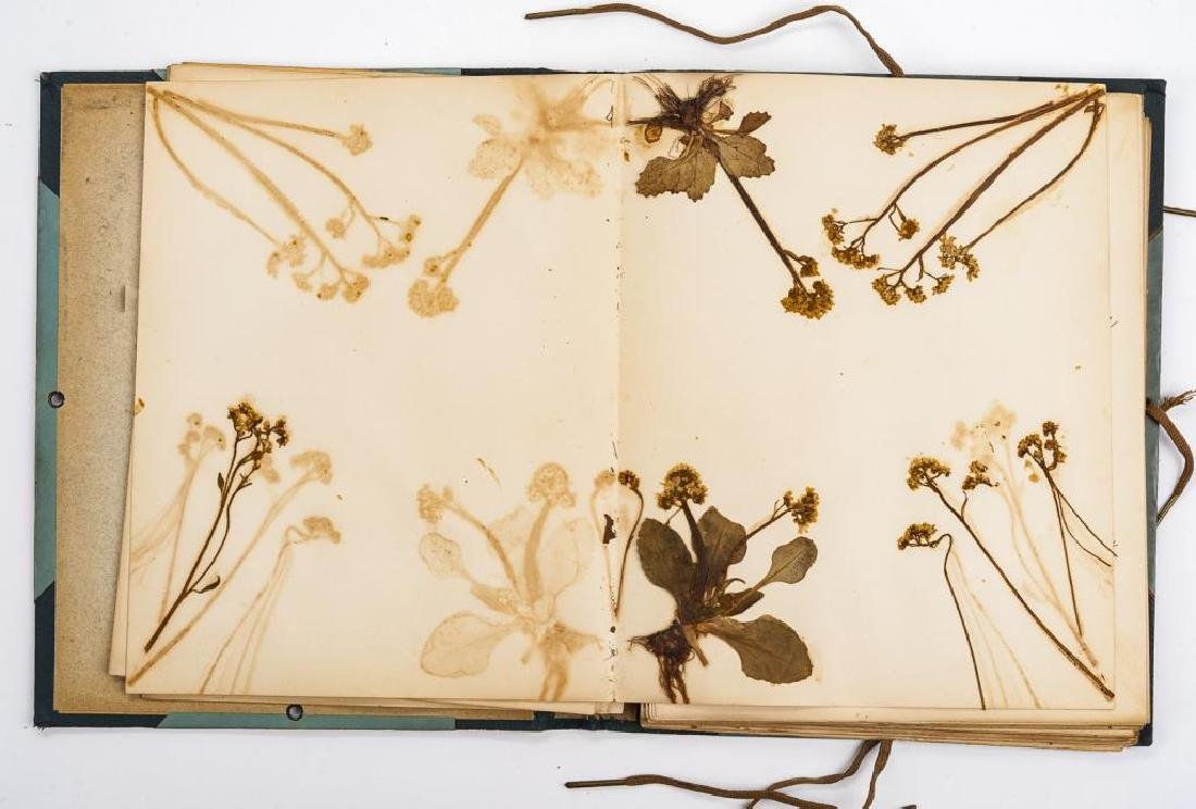 Herbarium & Plant Descriptions C. 1888 - 4