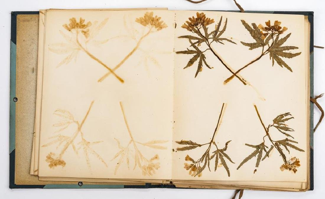 Herbarium & Plant Descriptions C. 1888 - 5