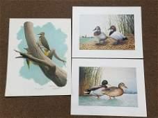 14 Wildlife Limited Edition Prints