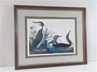 John James Audubon No. 41 Print