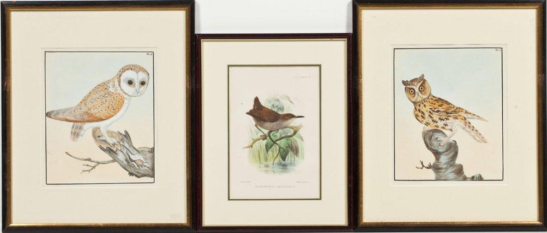 2 William Lewin Owl Watercolors & Joseph Smit Wren Lith