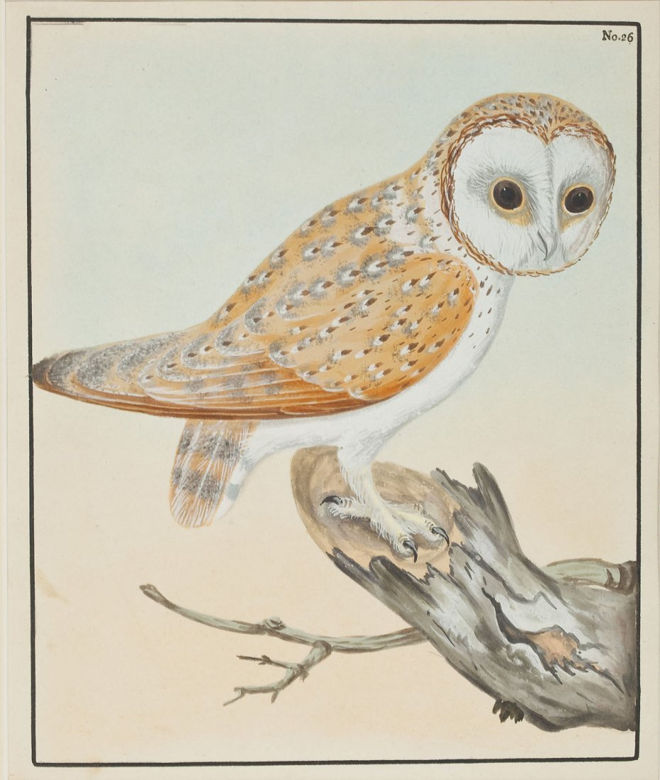 2 William Lewin Owl Watercolors & Joseph Smit Wren Lith - 2