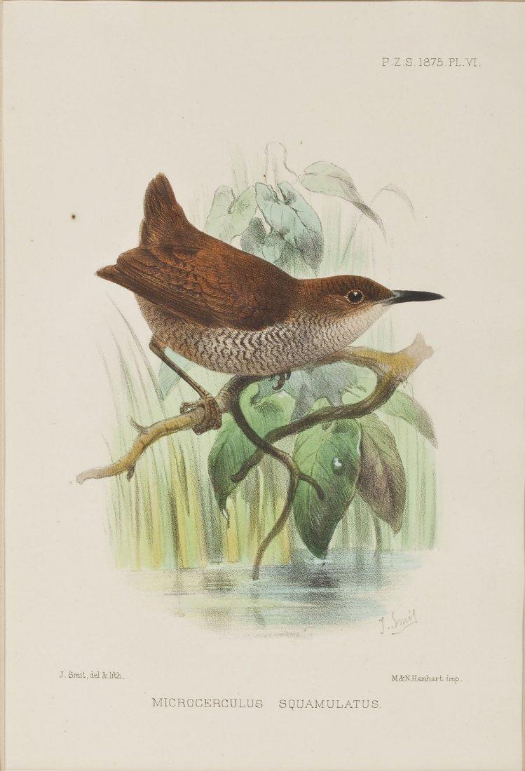 2 William Lewin Owl Watercolors & Joseph Smit Wren Lith - 4