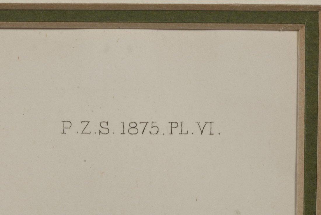 2 William Lewin Owl Watercolors & Joseph Smit Wren Lith - 6