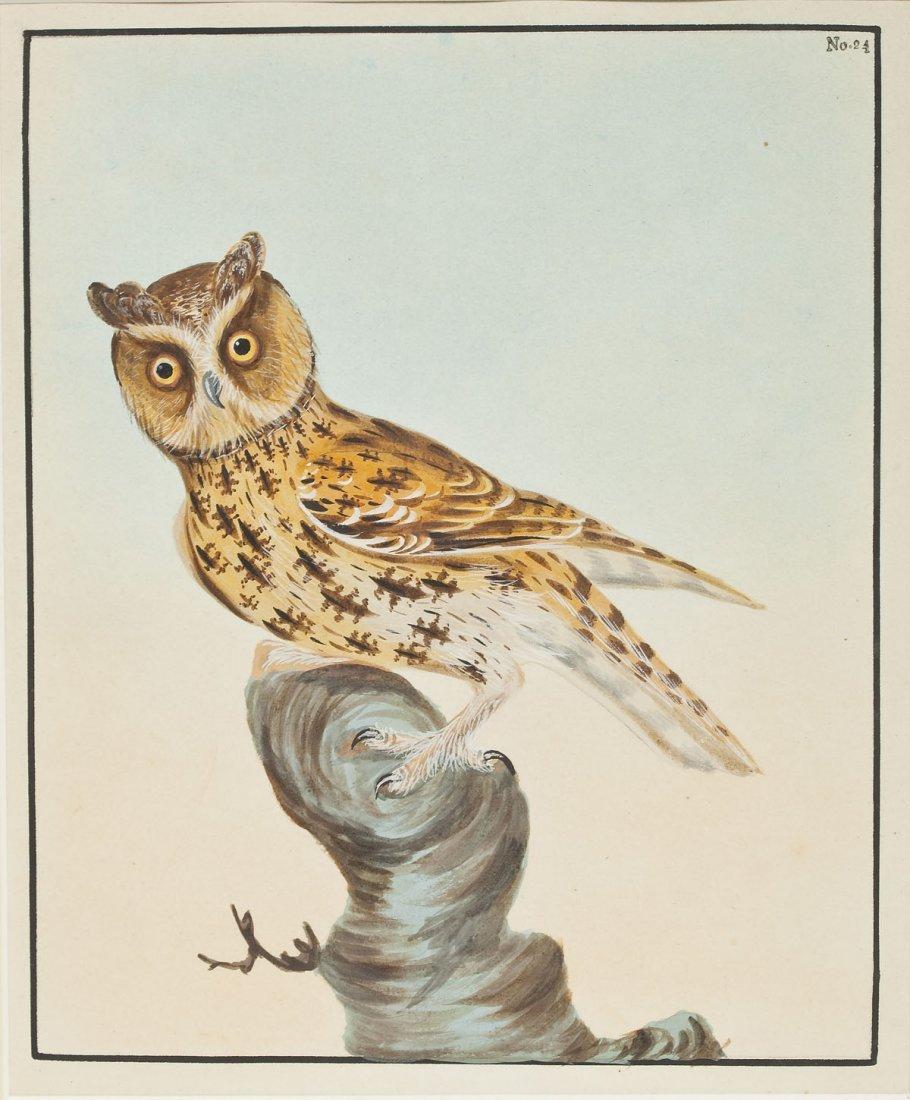 2 William Lewin Owl Watercolors & Joseph Smit Wren Lith - 7