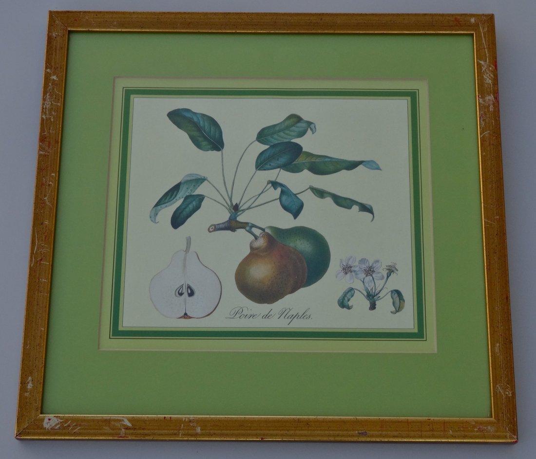 Antique Botanical Print Pear Engraving Poire De Naples
