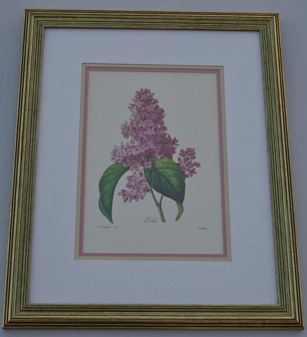 Lilas French Pink Lilac Vintage Botanical Print