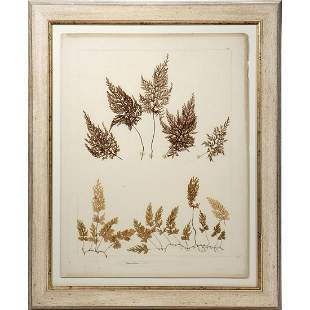 Two Late 19th/early 20th Mounted Pressed Plants.
