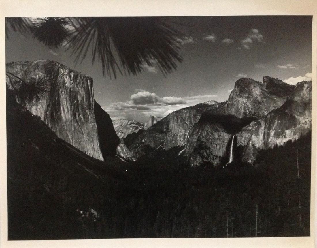 Vintage Photograph -Nature - unknown photographer -