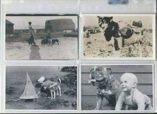 RPPCs (1906-1940) of Dogs