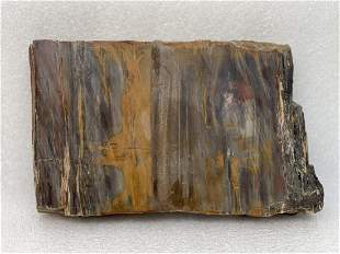Four pound slab of petrified wood