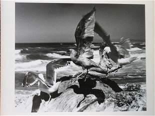 """Paul Delmar  -  """"What  A Flap""""  Vintage Photograph"""