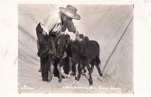 Little Wild horses