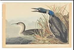 "John J. Audubon. Hand colored engraving. ""Great"