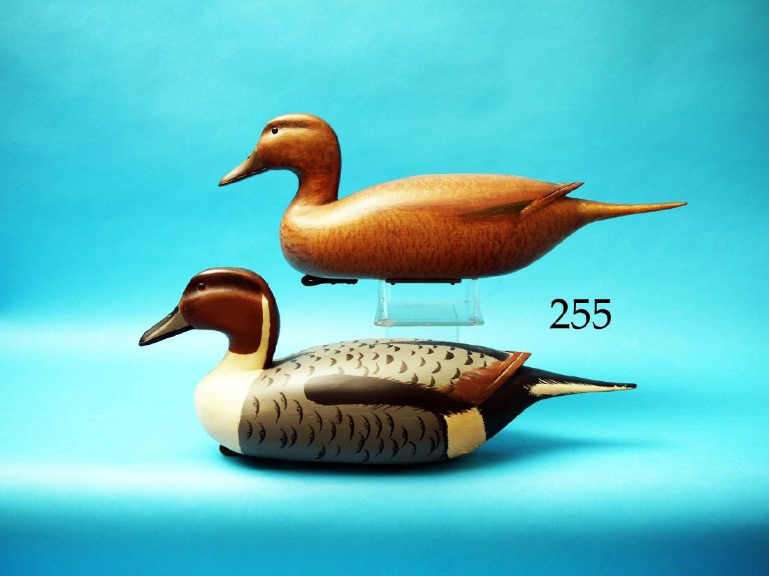 VERY FINE PAIR OF PINTAILS by  Nick Sacchi, Bristol,