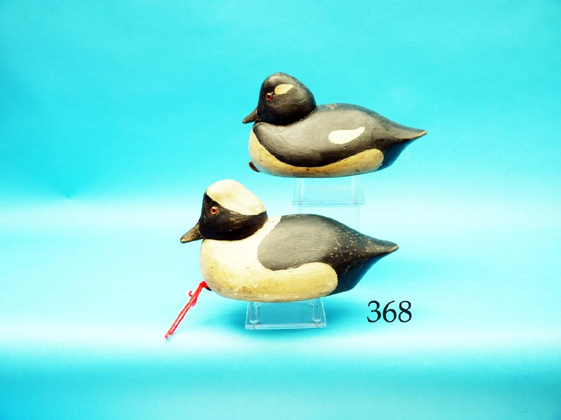 SPECIAL ORDER PAIR OF BUFFLEHEADS  by the Wildfowler