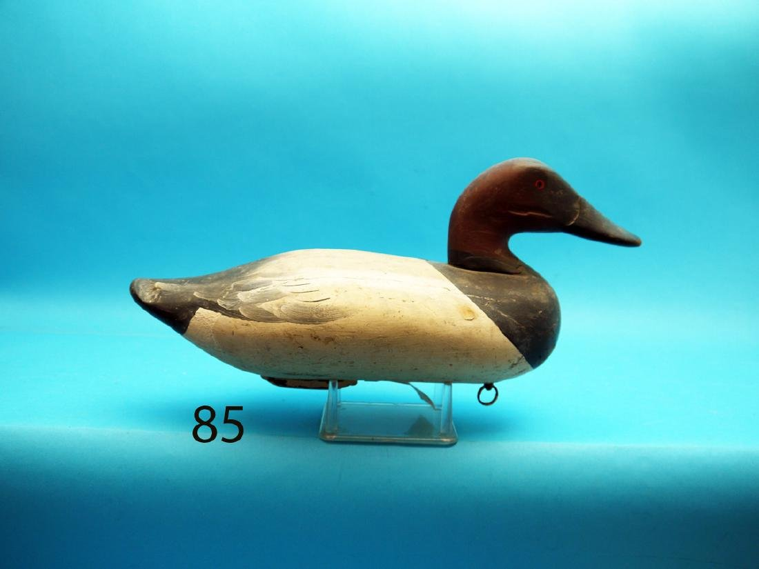 CANVASBACK DRAKE, Oxford, MD, in working paint and fair