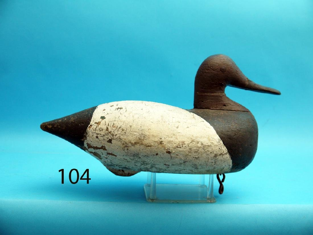 RARE AND VERY EARLY CANVASBACK DRAKE from the upper