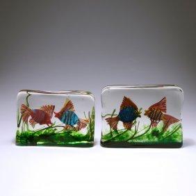 Two Aquariums, C1950