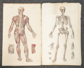 Bourgery Et Jacob, 'anatomie élémentaire', Anotomical